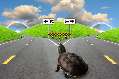 turtle at a fork in the road